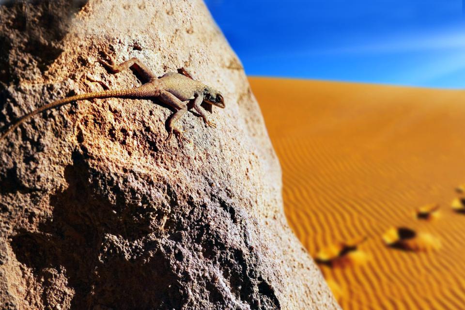 La fauna , Argelia