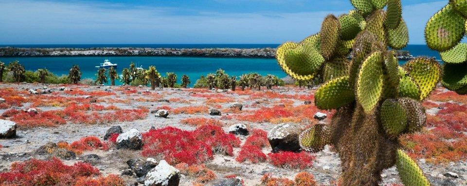 La fauna y flora de las Gal�pagos