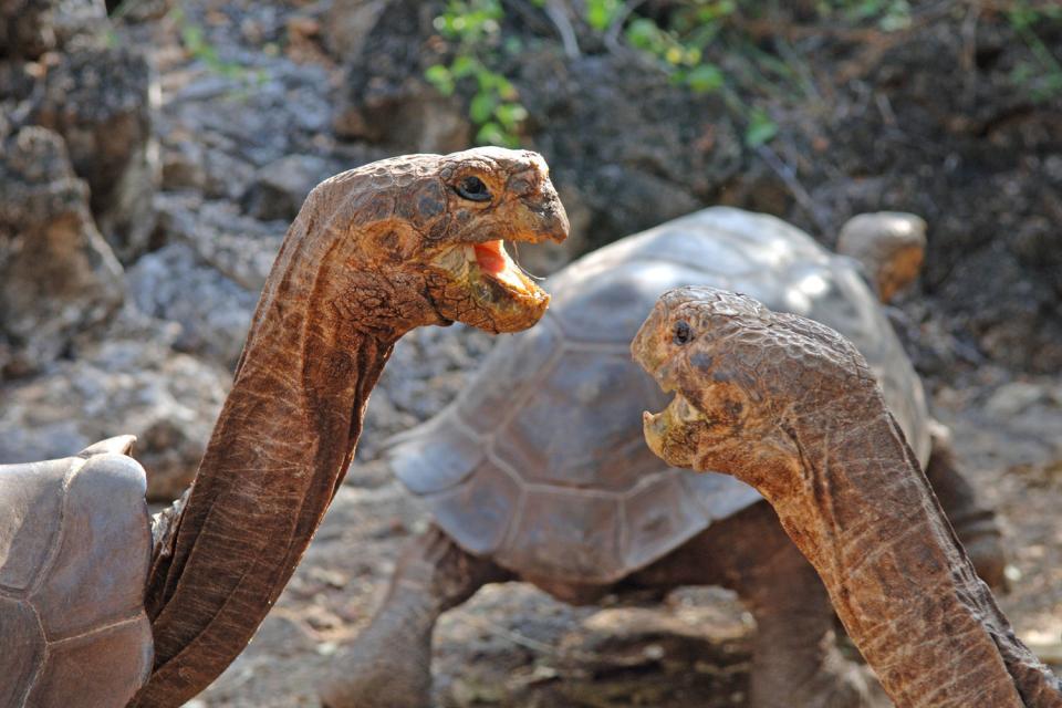 Fauna y flora de las Galápagos , Un león marino de las Galápagos , Ecuador y Galápagos
