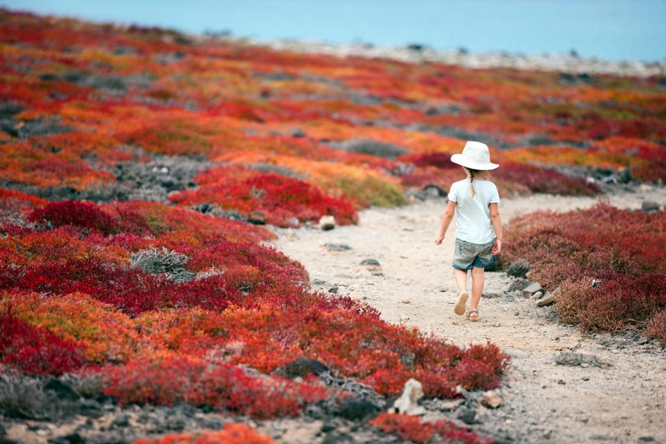 Les îles Galapagos , Un volatile des galapagos , Equateur et Galapagos