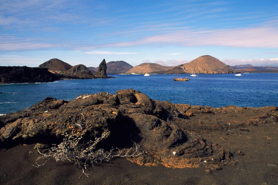 Les îles Galapagos , Un iguane marin des Galapagos , Equateur et Galapagos