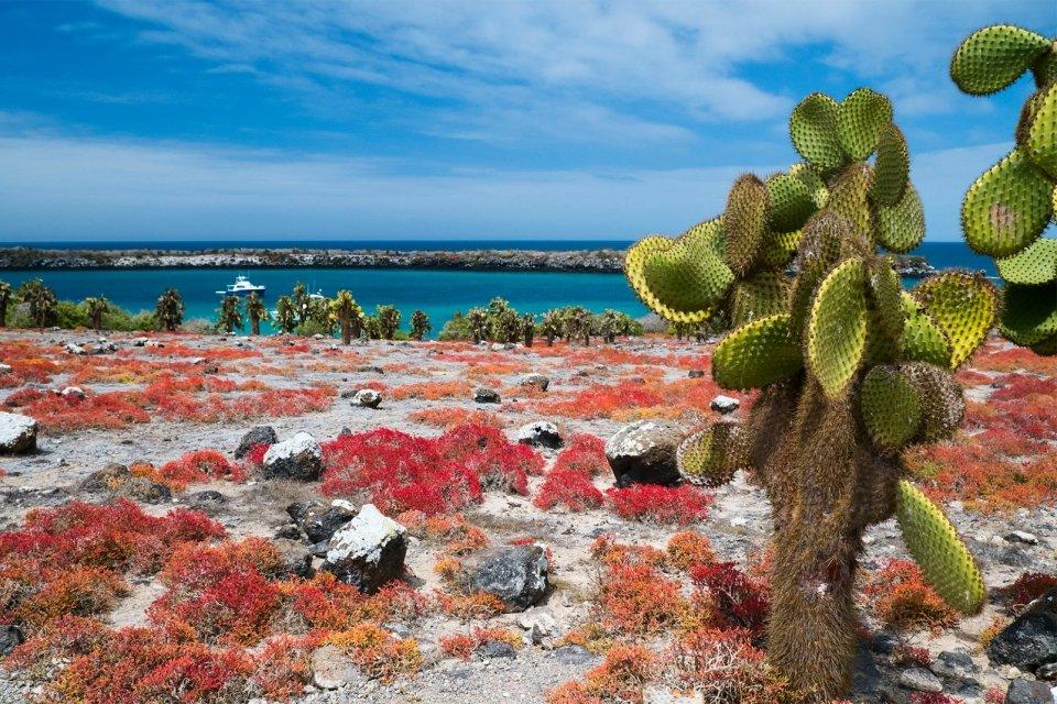 La faune et flore des Galapagos, Les îles Galapagos, La faune et la flore, Guayaquil, Equateur et Galapagos