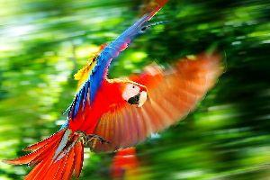 Fauna y flora del Oriente , Ecuador y Galápagos