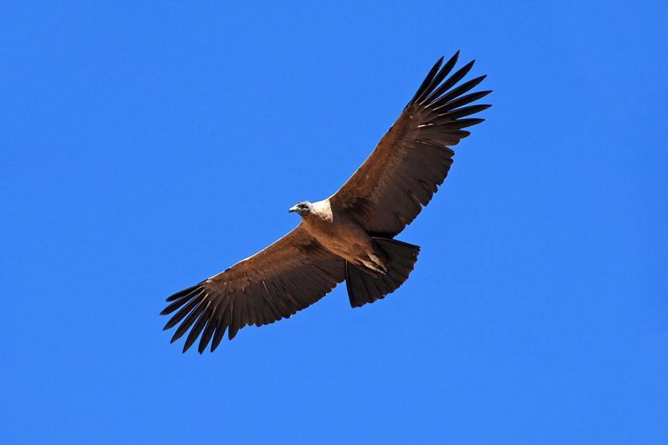 The fauna of the Andes , Ecuador and Galapagos Islands