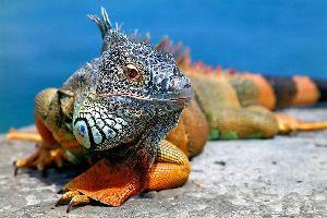 Fauna y flora de las costas , Ecuador y Galápagos