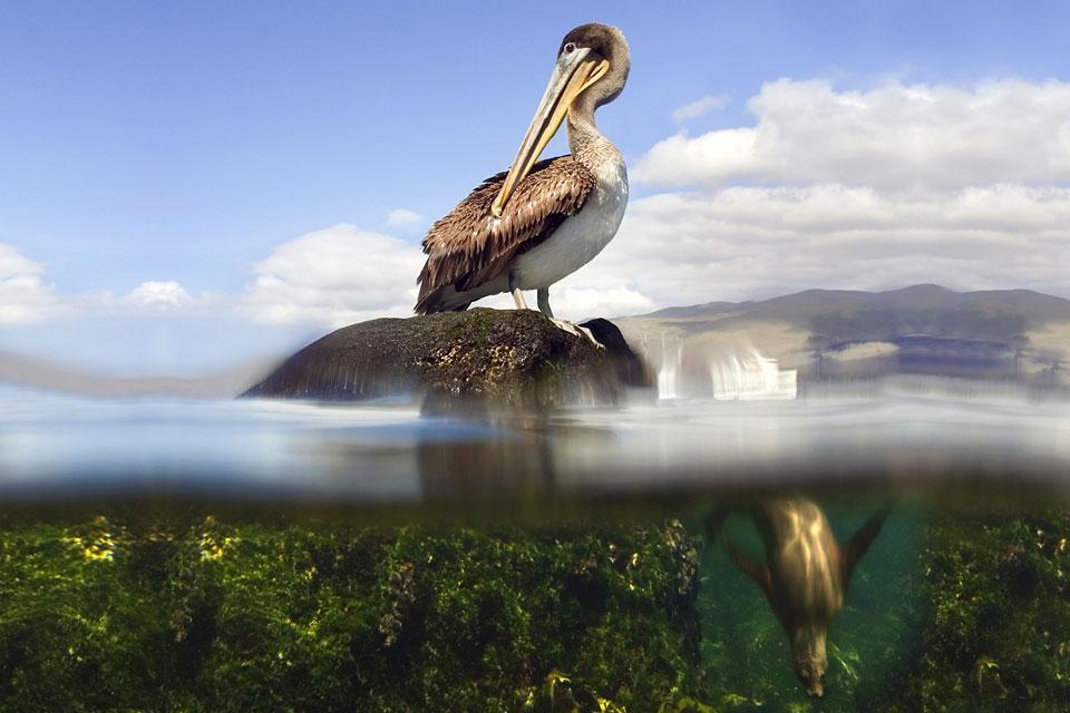 Faune et flore des côtes , Equateur et Galapagos