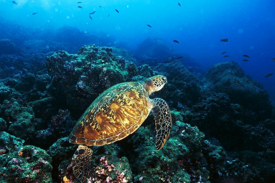 Le tartarughe delle galapagos ecuador e galapagos for Temperatura tartarughe