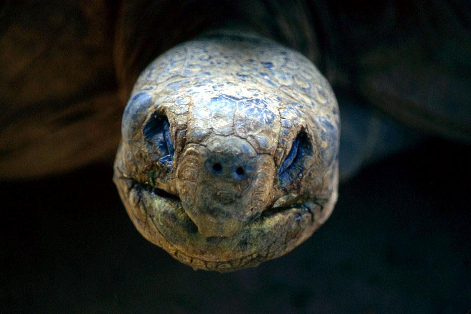 Las Tortugas de las Galápagos , Las tortugas de las Galápagos , Ecuador y Galápagos