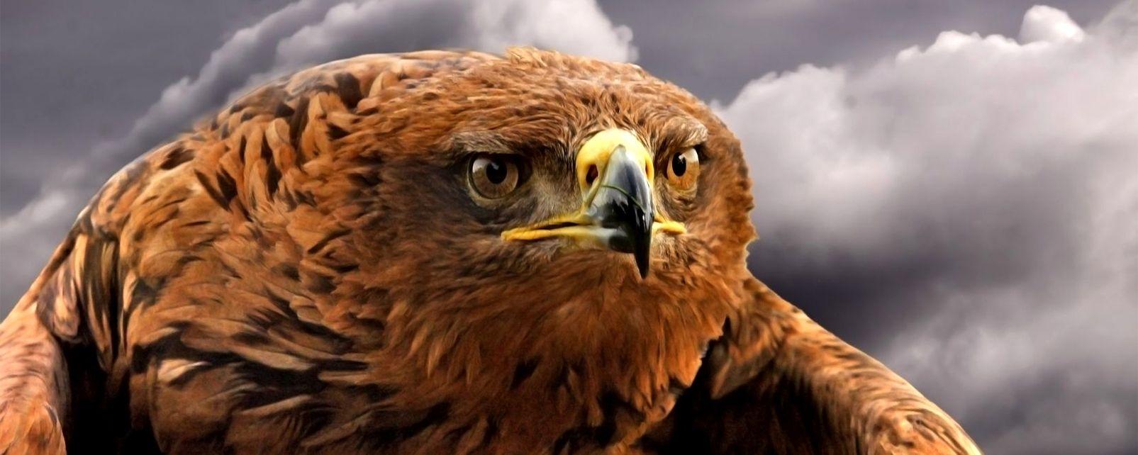 La faune et la flore, espagne, andalousie, europe, aigle, animal, faune, oiseau