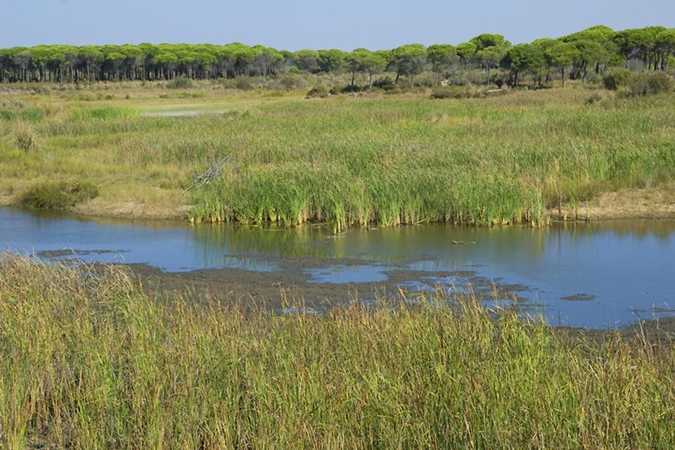 Le Parc national de Doñana , L'aigle impérial , Espagne