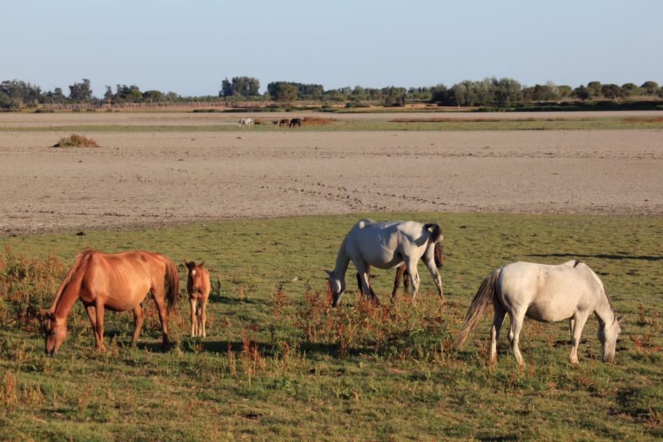 Le Parc national de Doñana , Patrimoine de l'Humanité , Espagne