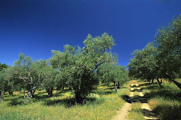 Parco naturale della Sierra Aracena y Picos de Aroche , Spagna