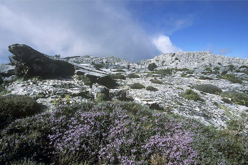 Sierra de Grazalema Natural Park , Spain