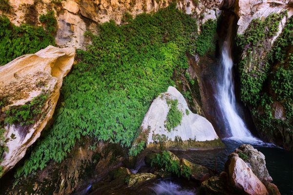 Naturpark der Sierra de Cazorla, Die Fauna und Flora, Andalusien