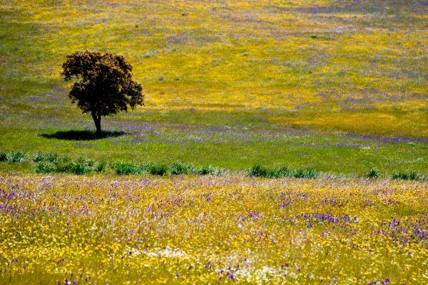 Die Pflanzenwelt, Naturpark der Sierra de Cazorla, Die Fauna und Flora, Andalusien