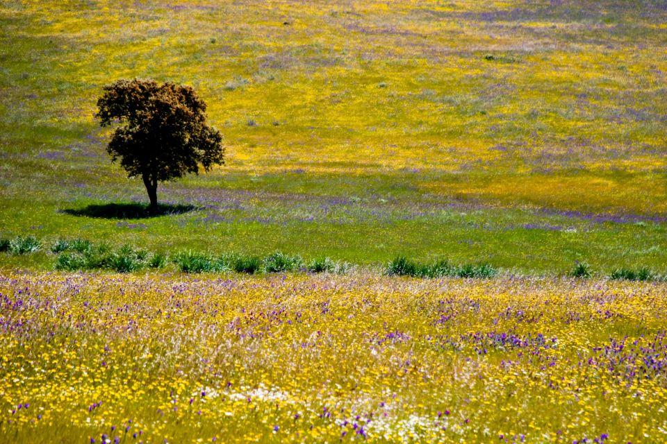Flora, Parque Natural de la Sierra de Cazorla, Fauna y flora, Andalucía
