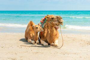 Séjour à Monastir : dès 143€ la semaine en Tunisie, vol A/R et hôtel proche des plages inclus !