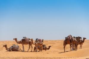 Séjour à Djerba : dès 236€ la semaine en Tunisie, vol A/R et hôtel avec piscines et plage privée !