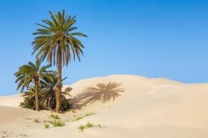 Séjour en Tunisie : dès 240€ la semaine à Djerba, vol A/R et hôtel 3* compris !