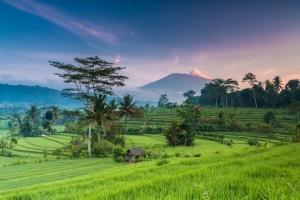 Vacances à Bali : dès 537€ le vol A/R pour une semaine sur l'île indonésienne !