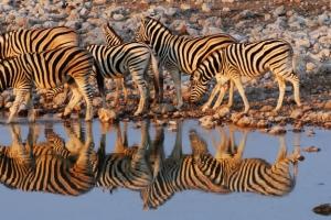 Inspiration voyage : partez en Safari en Namibie !