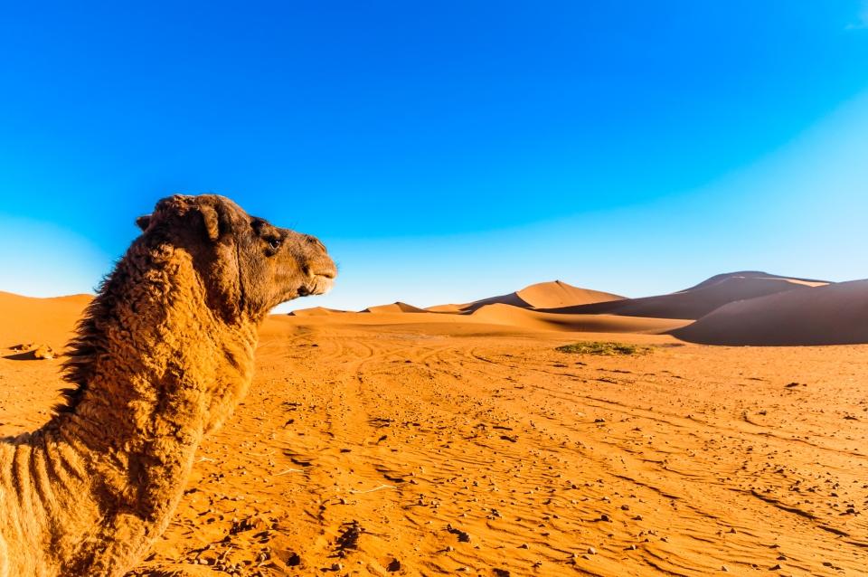 Vacances à Marrakech : dès 38€ le vol A/R pour 1 semaine sous le soleil marocain !