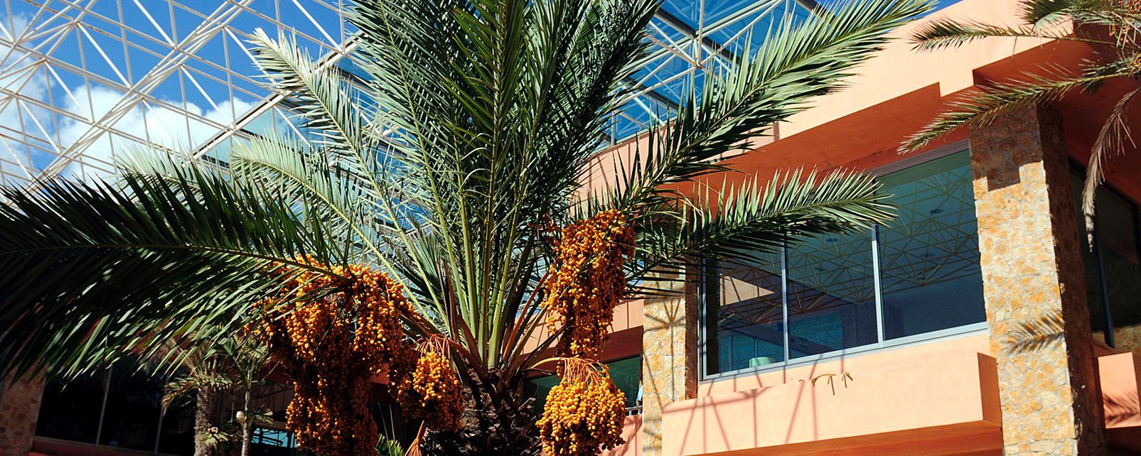 Hôtel Barcelo Fuerteventura Thalasso Spa