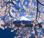 Leben in Japan