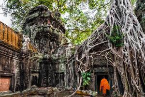 Asie, Cambodge, Siem Reap, Angkor, temple, Ta Prohm, moine, bouddhiste, ruine, jungle,