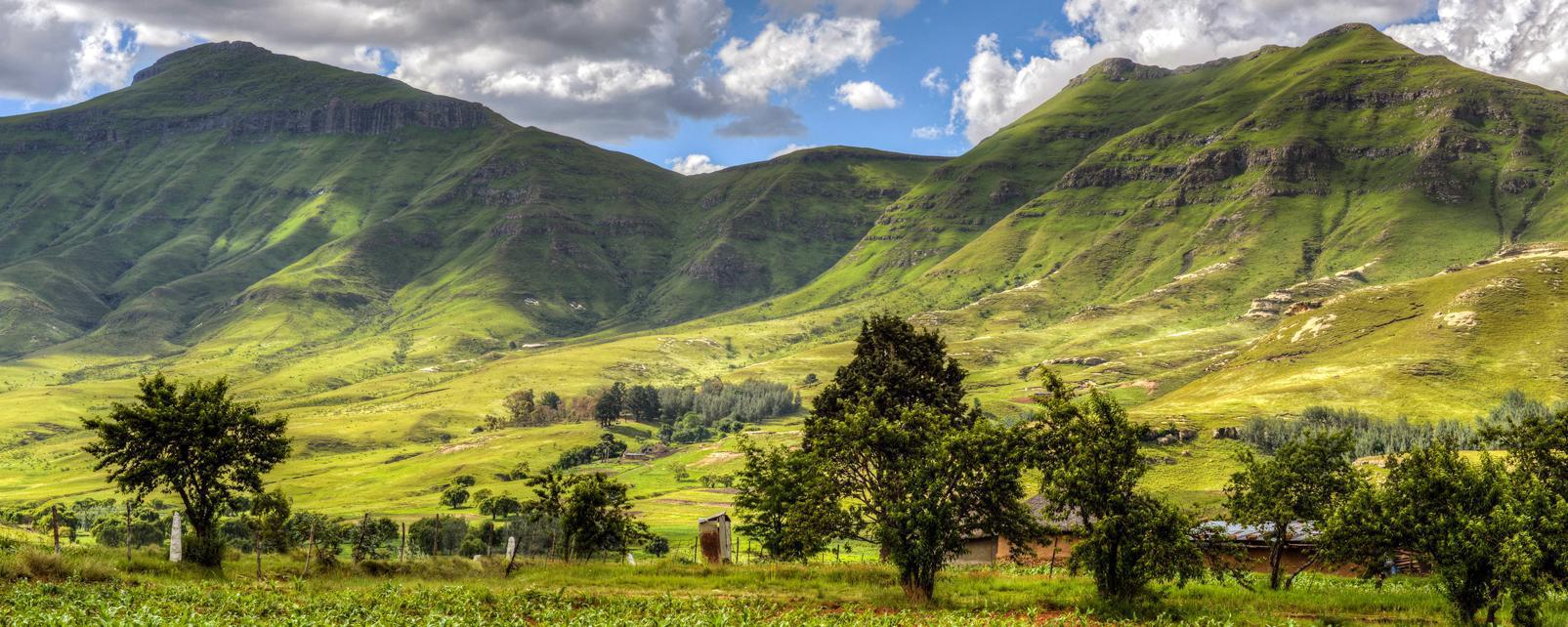 Afrique, Lesotho, Butha Buthe, montagne, plantation, hutte, arbre,