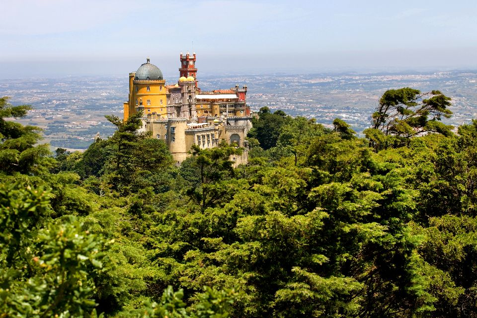 Europe, Portugal, Sintra, palais, palais de Sintra, forêt, arbre,