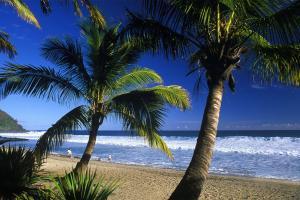 Océan Indien, Réunion, Grand Anse, plage, baignade, détente,