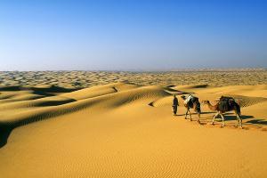 Afrique, Tunisie, Erg, désert, Douz, dune, sable, chameau,