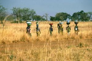 Afrique, Burkina Faso, savane, femme, arbre,