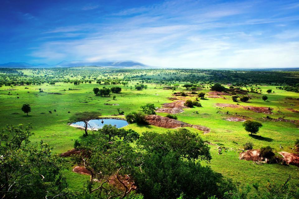Afrique, Tanzanie, Serengeti, réserve, lac, arbre, montagne,