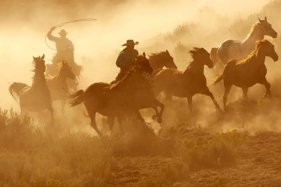 Amérique, Amérique du Nord, Etats-Unis, cow-boy, USA, cheval, cowboy,