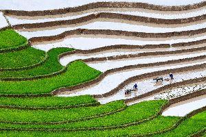 Asie, Vietnam, Yen Bai, rizière, terrasse, Mu Cang Chai, agriculture, paysan, riz,