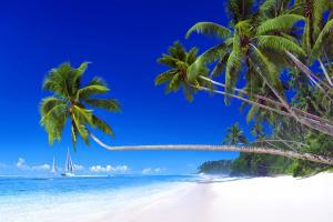 Océanie, Samoa, plage, baignade, voilier, sable, mer, arbre,