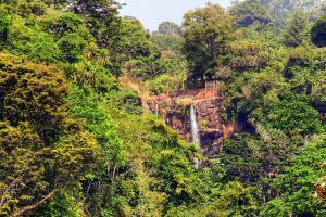 Afrique, Cameroun, cascade, Mamy Wata, chute, forêt, luxuriante, arbre, jungle,