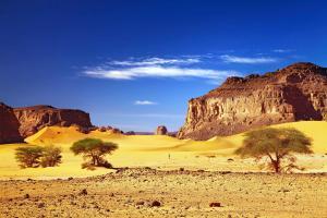 Afrique, Algérie, Tadrart, désert, Sahara, dune, sable, montagne, arbre,