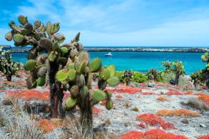 Amérique, Amérique du Sud, Equateur et Galapagos, Equateur, plage, cactus,