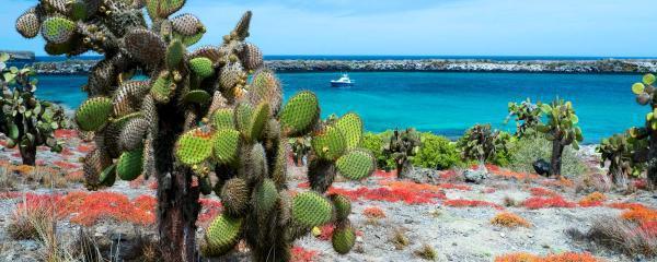 Equateur et Galapagos