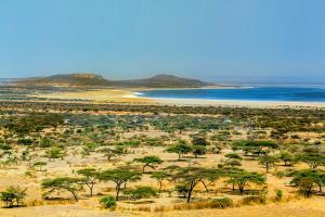 Afrique, Ethiopie, Abjatta Shalla, prairie, savane, parc, national, arbre, plage, montagne, végétation,
