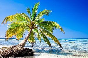 Caraïbes, Haïti, Haiti, plage, barque, sable, mer,