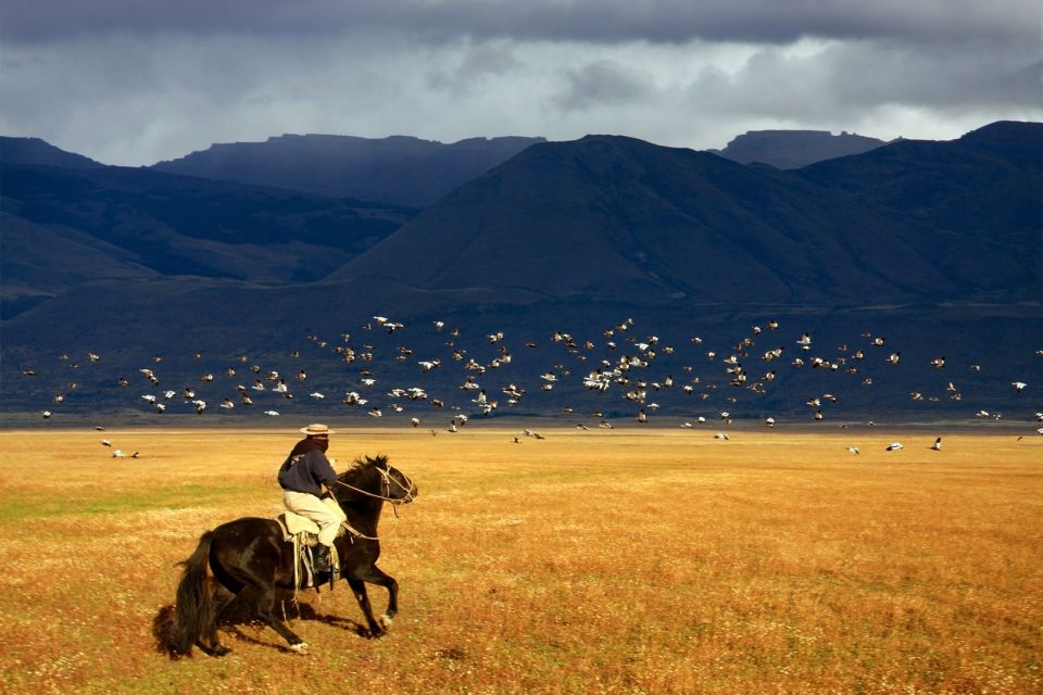 amerique, Argentine, gaucho, cheval, animal, faune, mammifère, montagne, patagonie, pampa