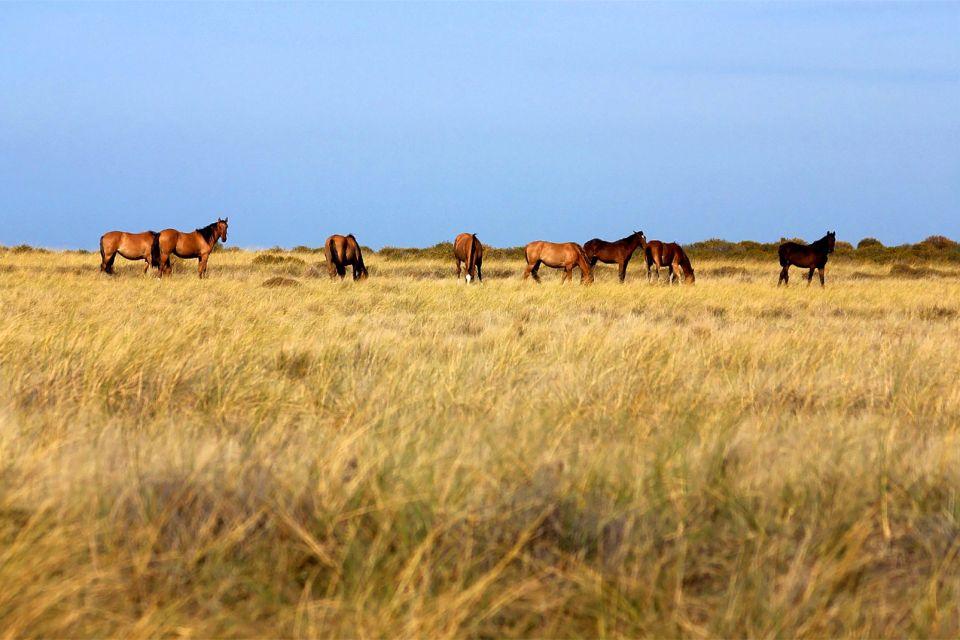 amerique, Argentine, valdés, péninsule, patagonie, chevaux, animal, mammifère, faune