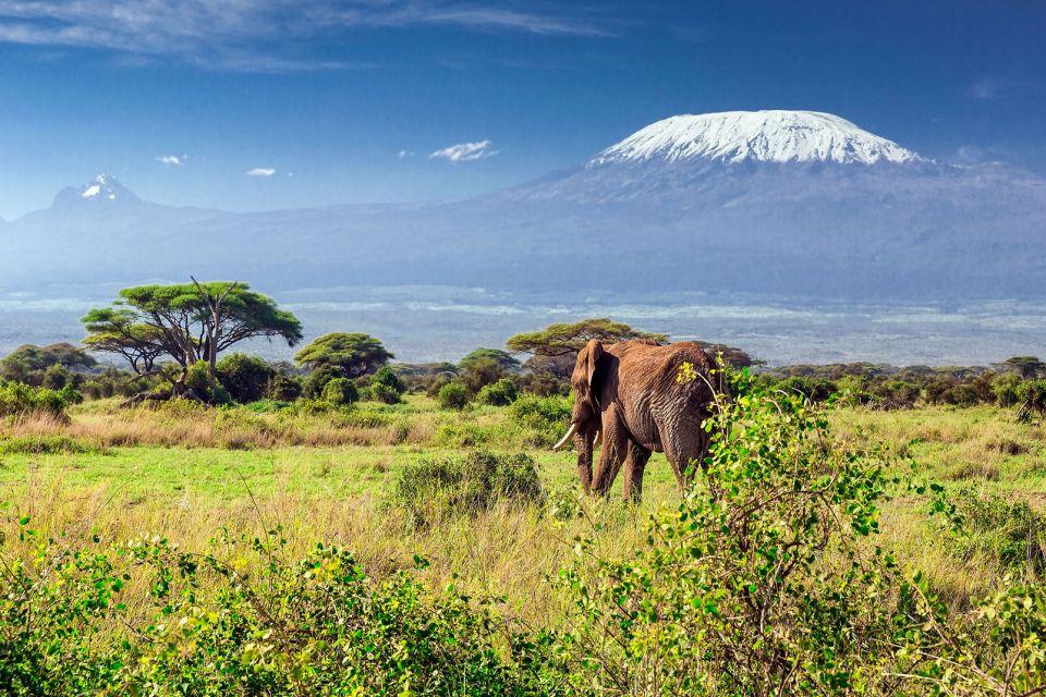afrique, kenya, kilimanjaro, mont, montagne, éléphant, mammifère; paysage