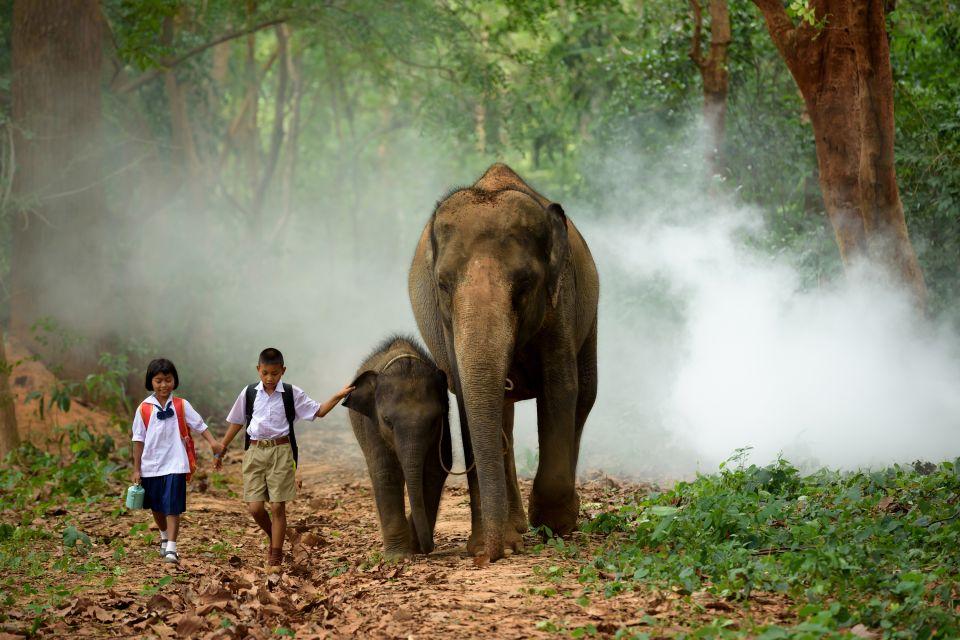Asie, Cambodge, animal, faune, mammifère, éléphant, cornac