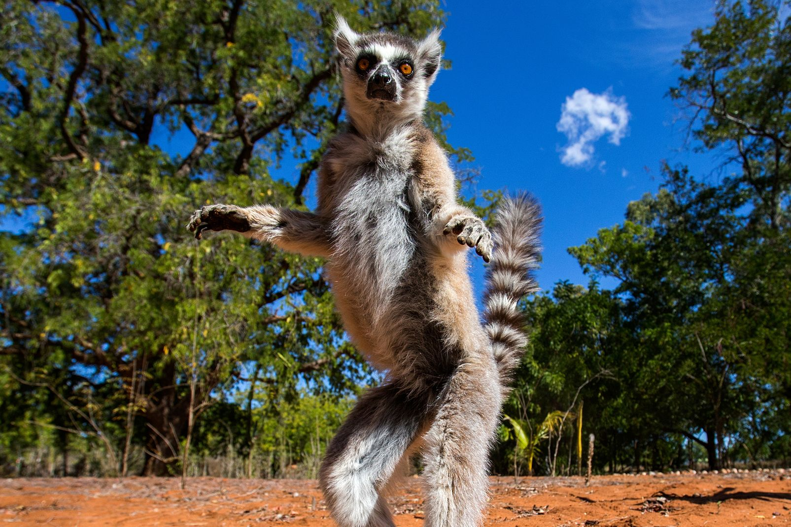 madagascar-photos