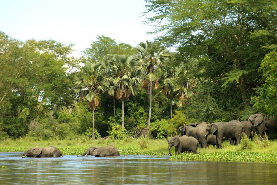 afrique, malawi, faune, flore, troupeau, éléphant, eau, baignade